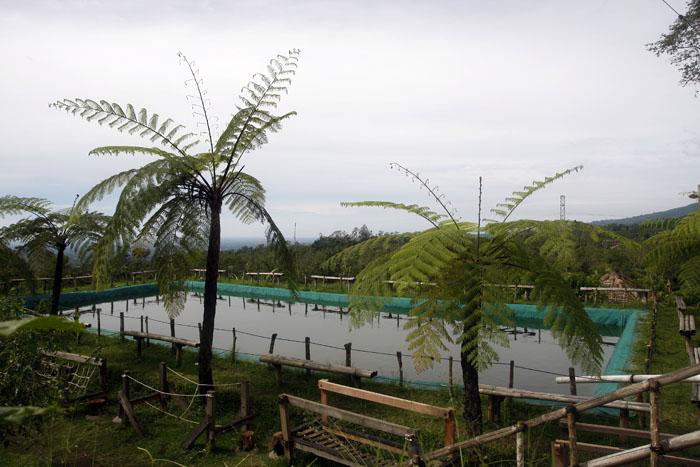 Kolam Pancing di Bali