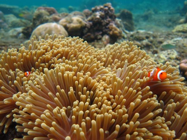 Nemo Bali Outbound