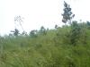 bukitcinta2
